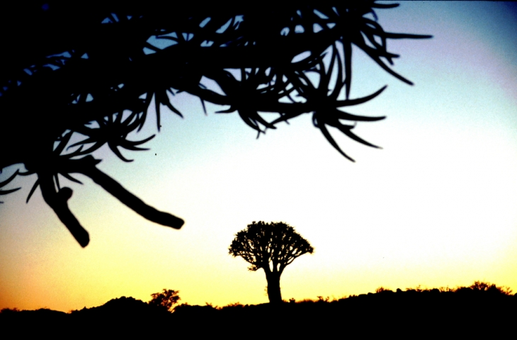 Namibia - Kokerboom 06