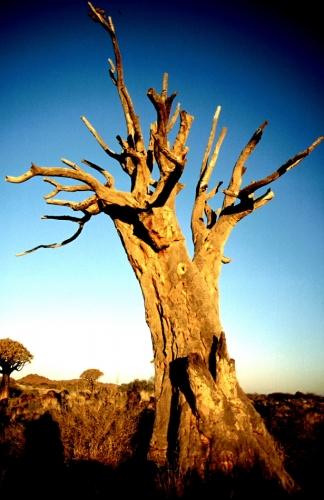 Namibia - Kokerboom 07