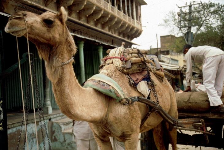 India - Jaisalmer 007 - On the road