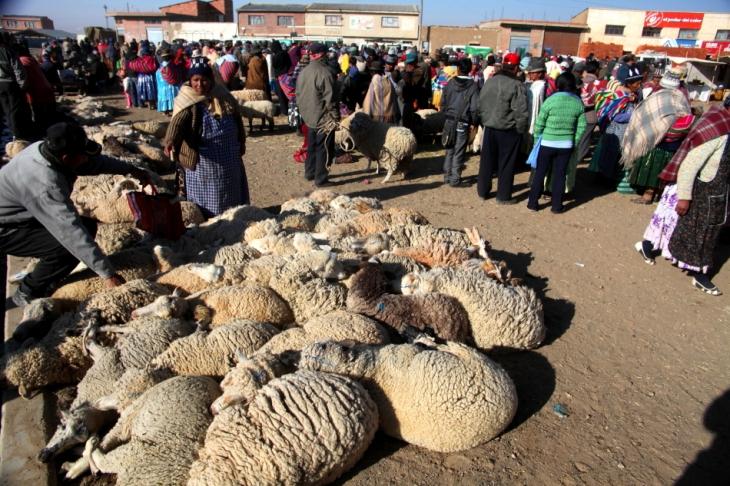 Bolivia - Itinerary La Paz-Sajama-Coipasa 007 / Patacamaya Sunday market