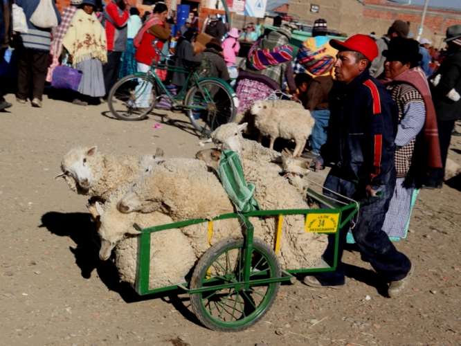 Bolivia - Itinerary La Paz-Sajama-Coipasa 009 / Patacamaya Sunday market