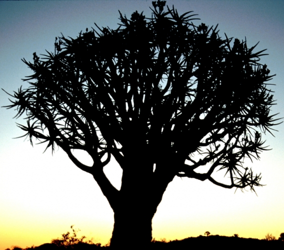 Namibia - Kokerboom 10