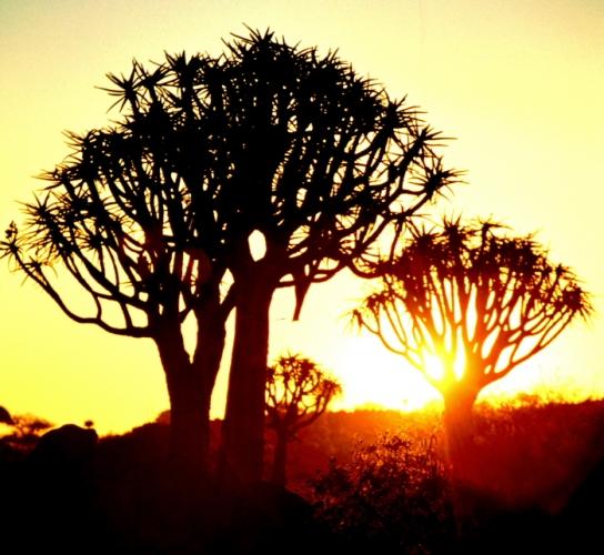 Namibia - Kokerboom 11