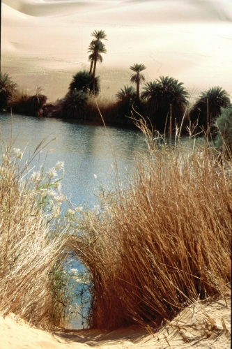 Libya - Sahara desert 013 - Oum El Ma