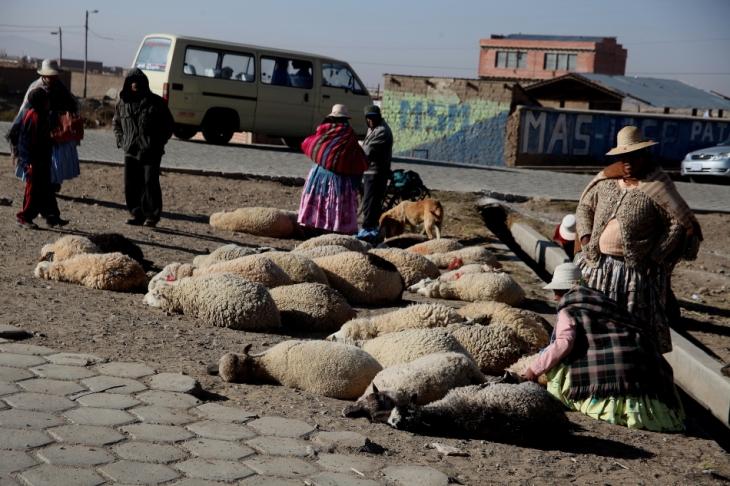 Bolivia - Itinerary La Paz-Sajama-Coipasa 012 / Patacamaya Sunday market
