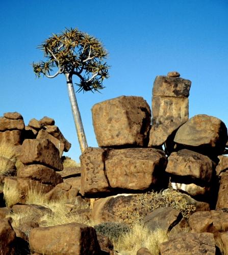 Namibia - Kokerboom 15
