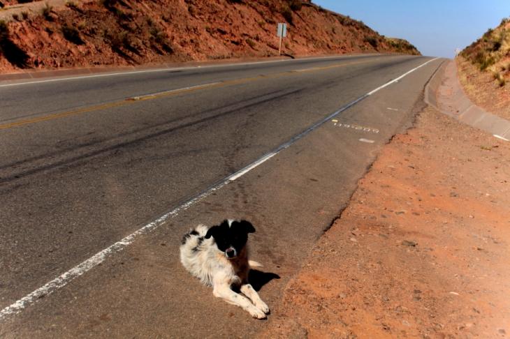 Bolivia - Itinerary La Paz-Sajama-Coipasa 015 / On the road to Sajama