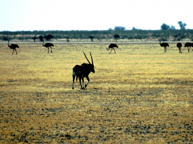 Botswana - Kalahari 21