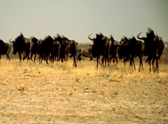 Botswana - Kalahari 22
