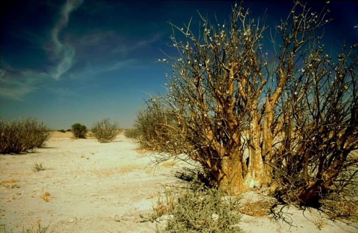 Botswana - Kalahari 28