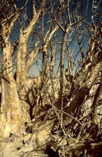 Botswana - Kalahari 31