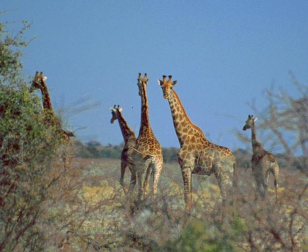 Botswana - Kalahari 33
