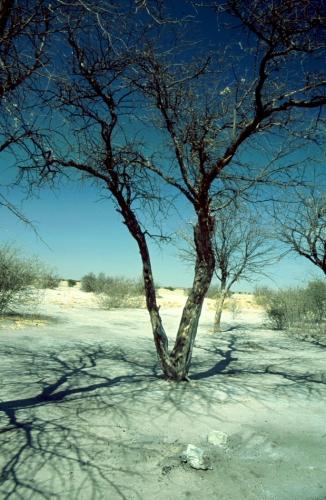 Botswana - Kalahari 40