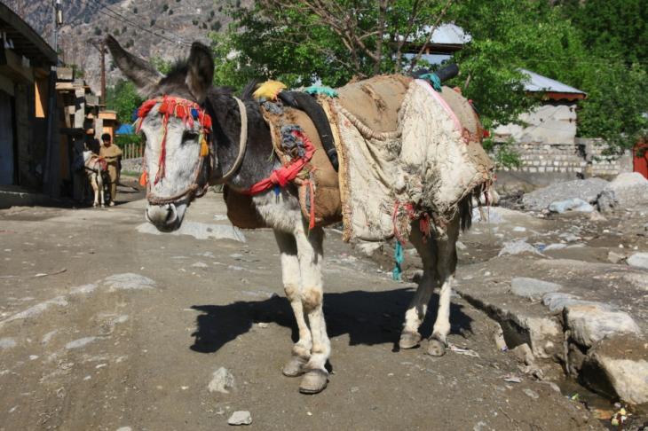 Pakistan - Kalash 040 - Bumburet valley