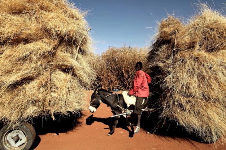 Burkina Faso - Djibo 042