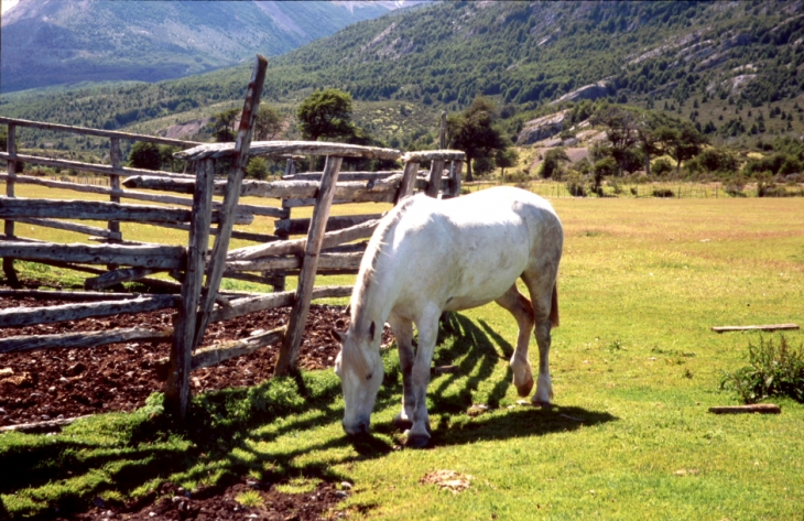 Chile 046 - Puerto Natales area