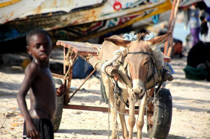 Senegal - N' Dangane 047