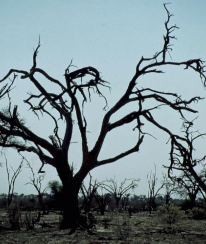 Botswana - Kalahari 77