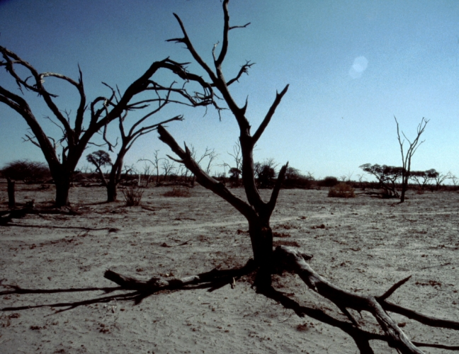 Botswana - Kalahari 79