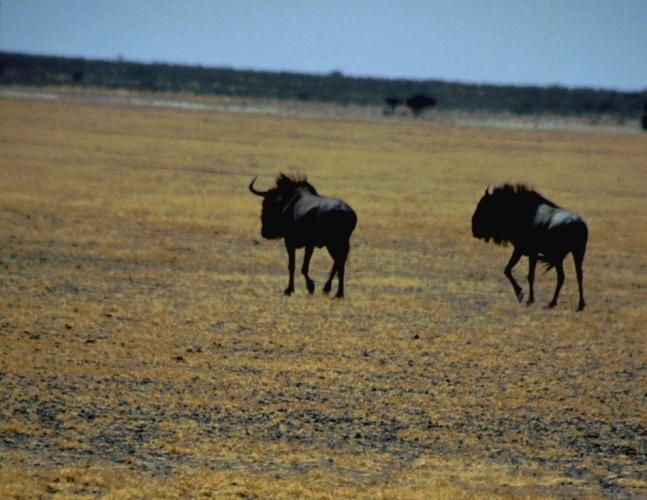 Botswana - Kalahari 70