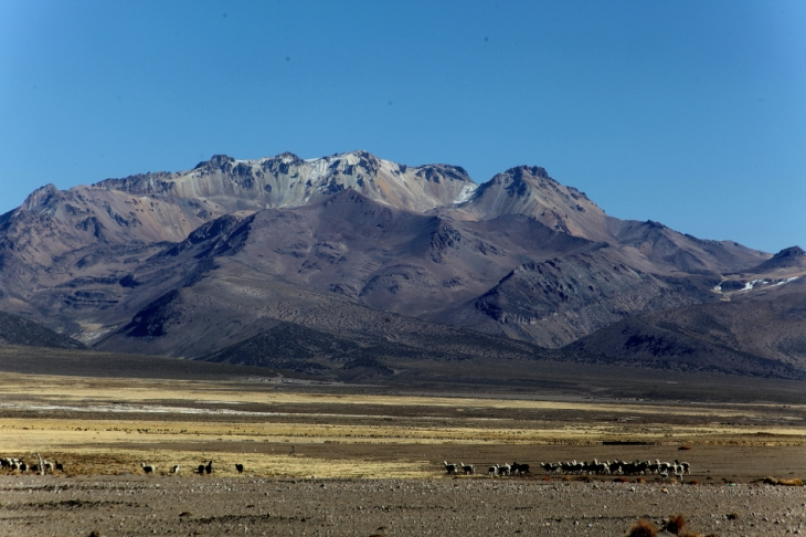 Bolivia - Itinerary La Paz-Sajama-Coipasa 059 / Around Sajama