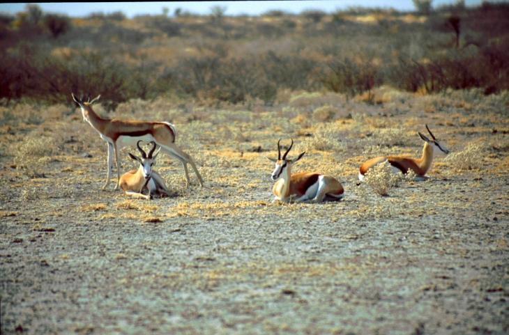 Botswana - Kalahari 71