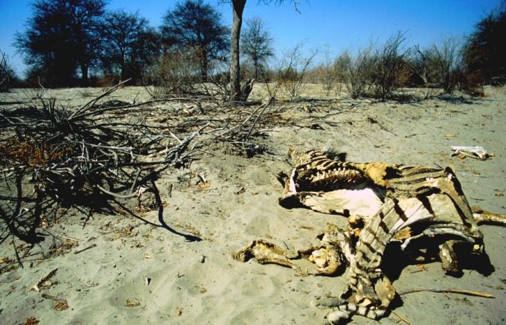 Botswana - Kalahari 68