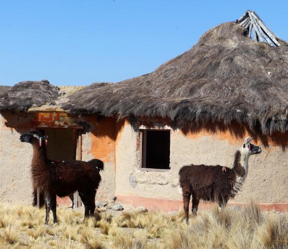 Bolivia - Itinerary La Paz-Sajama-Coipasa 072 / Around Sajama