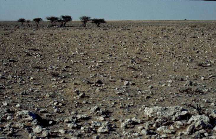 Botswana - Kalahari 63