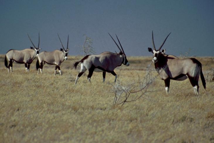Botswana - Kalahari 73