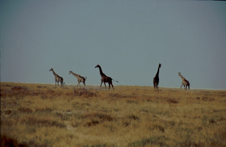 Botswana - Kalahari 72