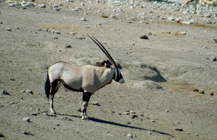 Botswana - Kalahari 61