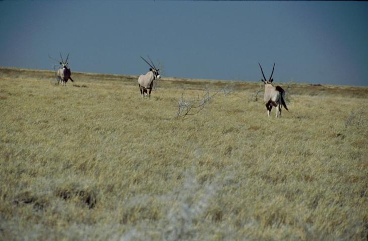Botswana - Kalahari 74