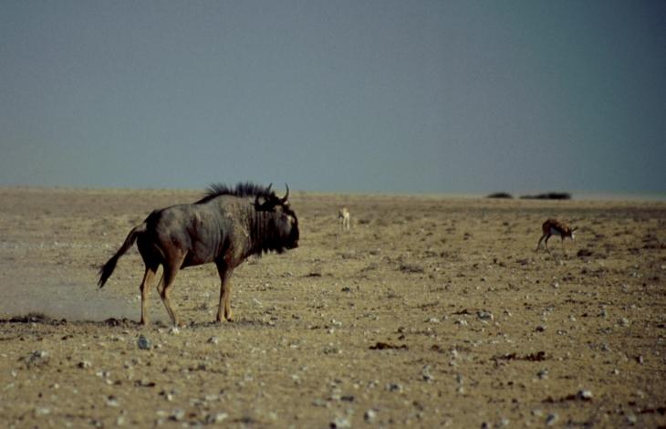 Botswana - Kalahari 57