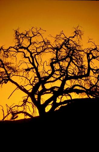 Botswana - Kalahari 48