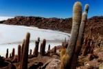 Bolivia 085 - Salar de Uyuni - Incahuasi