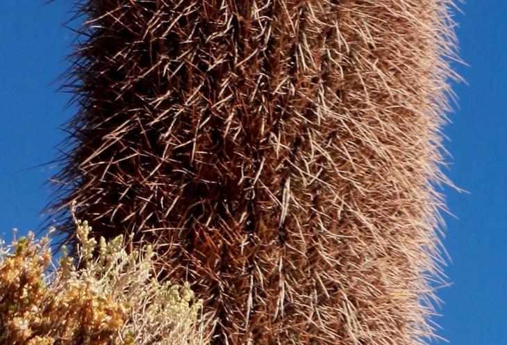 Bolivia 088 - Salar de Uyuni - Incahuasi