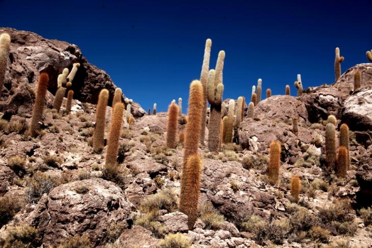 Bolivia 093 - Salar de Uyuni - Incahuasi