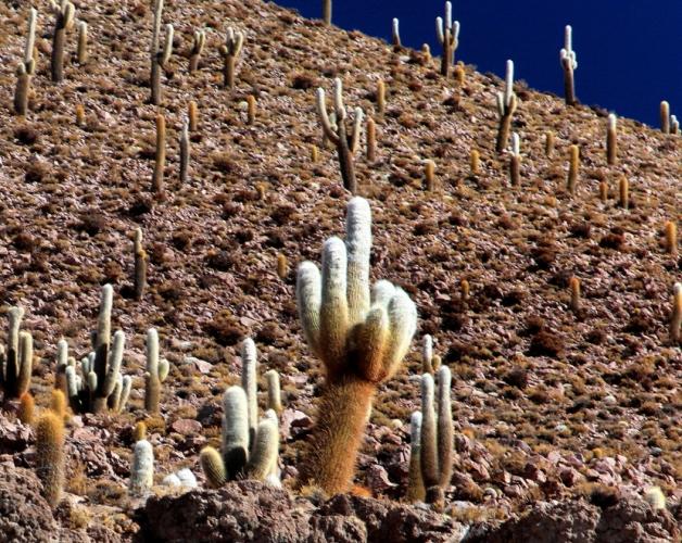 Bolivia 097 - Salar de Uyuni - Incahuasi