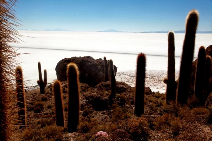 Bolivia 099 - Salar de Uyuni - Incahuasi