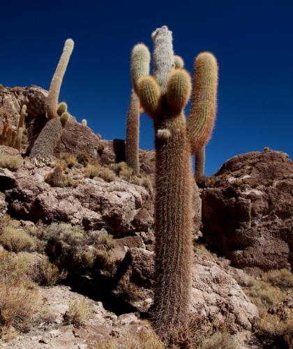 Bolivia 101 - Salar de Uyuni - Incahuasi