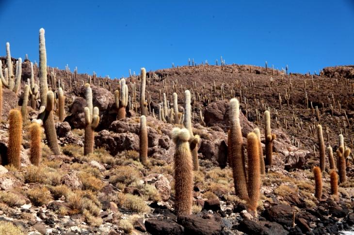 Bolivia 102 - Salar de Uyuni - Incahuasi