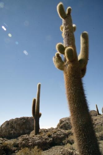 Bolivia 104 - Salar de Uyuni - Incahuasi