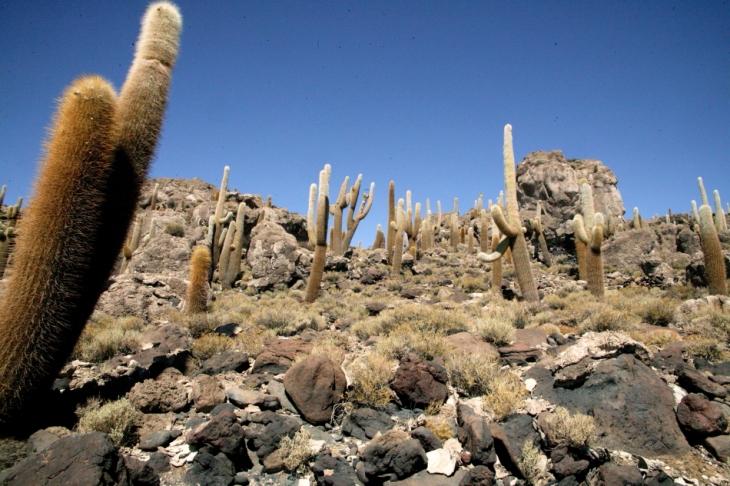 Bolivia 105 - Salar de Uyuni - Incahuasi
