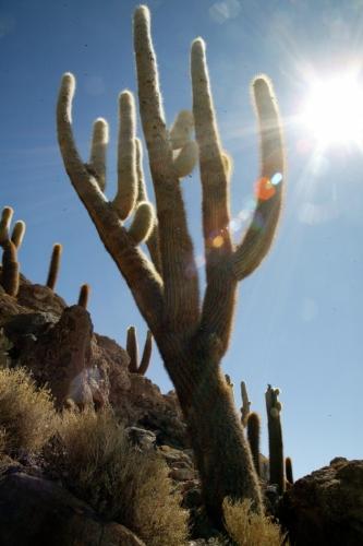 Bolivia 106 - Salar de Uyuni - Incahuasi