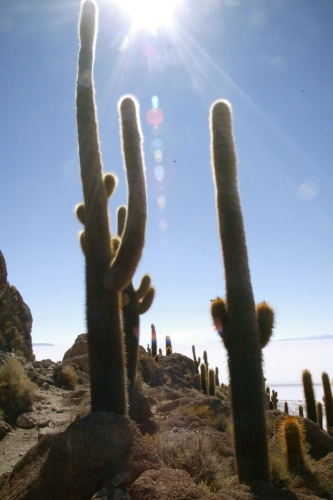 Bolivia 107 - Salar de Uyuni - Incahuasi