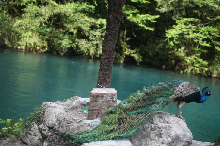 Abkhazia - Caucasus 028