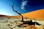 Namibia - Namib Naukluft National Park 109 - Deadvlei