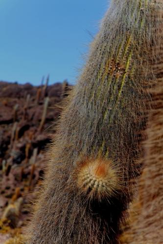 Bolivia 110 - Salar de Uyuni - Incahuasi