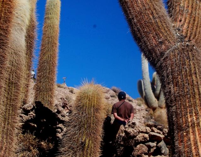 Bolivia 114 - Salar de Uyuni - Incahuasi